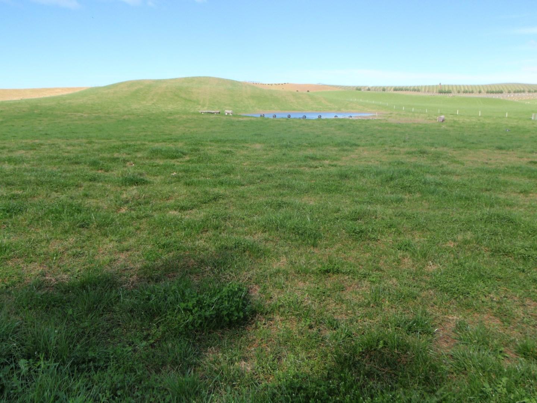 how to kill giant parramatta grass